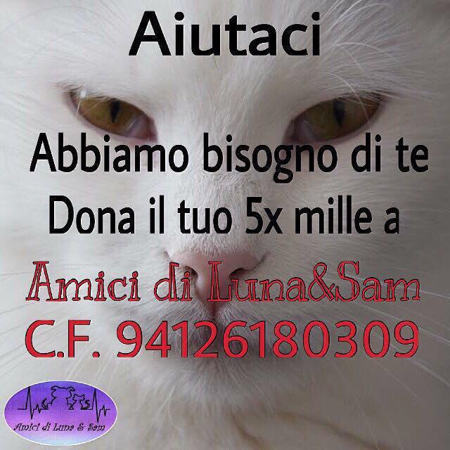 Abbiamo bisogno di te, dona il tuo 5 per mille ad Amici di Luna & Sam. CF 94126180309